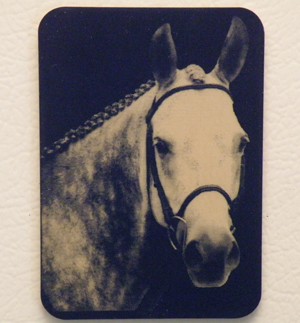 Plastic engraved horse magnet equestrian gift or horse show award item.