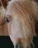 Horse classifieds are a great place to buy and sell horses