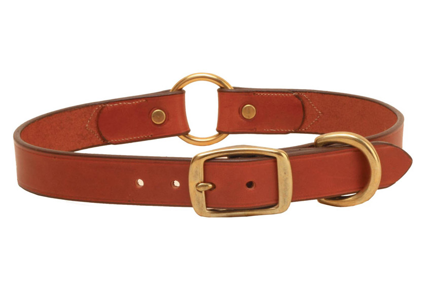 Hunting Dogs With Collars