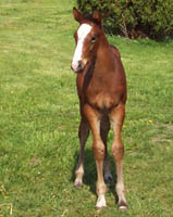 Its All Ear Say - Thoroughbred gelding - Future Racehorse