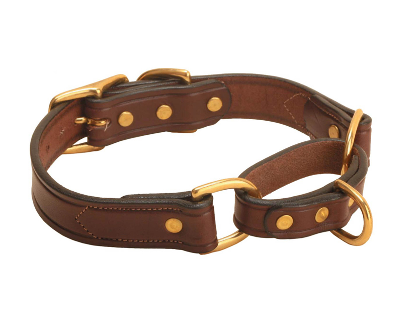 English leather martingale dog collar with solid brass hardware.