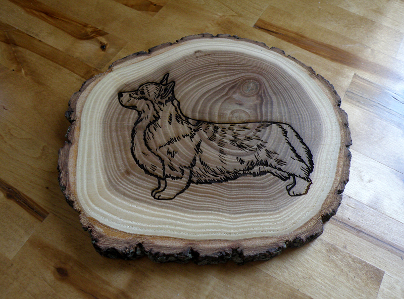 Custom engraved Pembroke Welsh Corgi bark edge trivet made out of elm wood.
